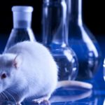 Animal Testing Essay: The Best Topics and Guidelines